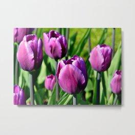 Purple Tulips Metal Print