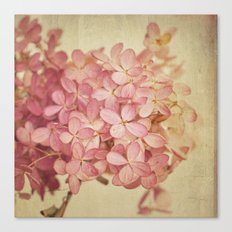 Hortensia Canvas Print