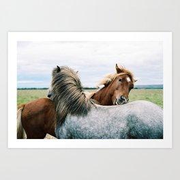 Iceland - Horse love (Leica M3 & Kodak film) Art Print
