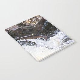 Leaping Atlantic salmon salmo salar Notebook