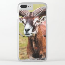 goat picture Clear iPhone Case