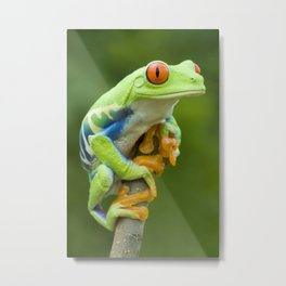 Red-eyed Tree Frog 4 Metal Print