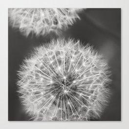 Dandelion Wishes Leinwanddruck