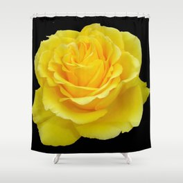 Beautiful Yellow Rose Flower on Black Background Shower Curtain