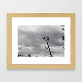Bear Lake Visitor Framed Art Print