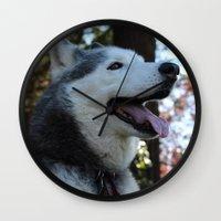 husky Wall Clocks featuring Husky. by Saremotion