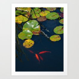 Red Koi Fish in Lily Pad Pond Art Print