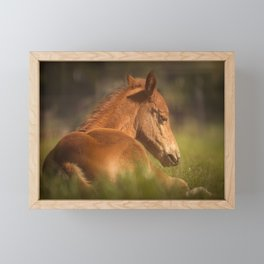 Cute Foal Laying Down Framed Mini Art Print