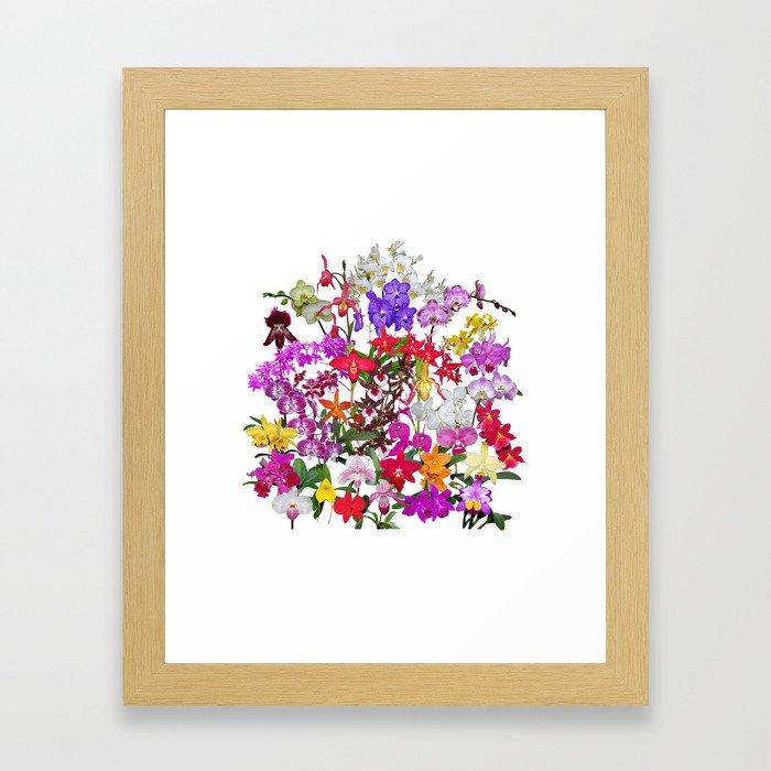 A celebration of orchids Framed Art Print