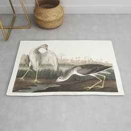 Tell tail goodwit or snipe, Birds of America, Audubon Plate 308 Rug