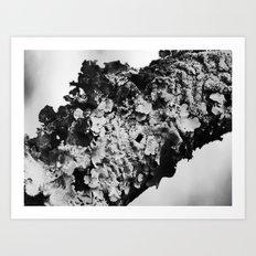 fungus 2015  Art Print