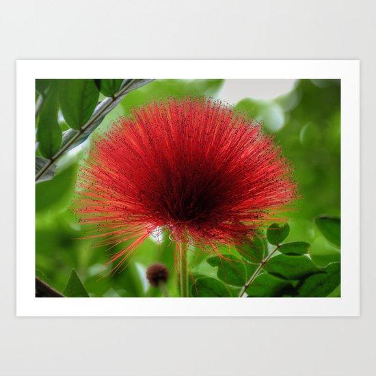 Hairy Flower Art Print