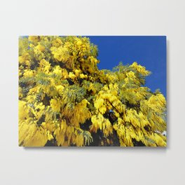 Australian Golden Wattle Metal Print