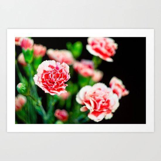 Carnation III Art Print