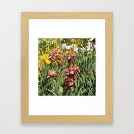Iris Flowers Framed Art Print