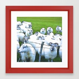Sheepish Framed Art Print