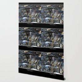 """Vision Quest""  Wild Grey Wolf Wallpaper"