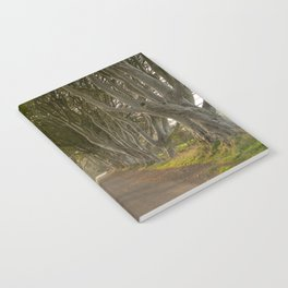 The Dark Hedges Notebook
