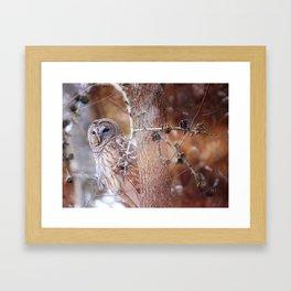 Owl :: In the Pines Framed Art Print