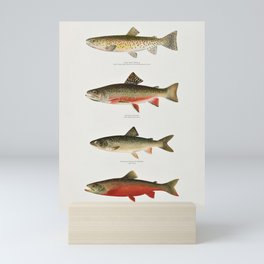 Illustrated North American Freshwater Trout Game Fish Identification Chart Mini Art Print