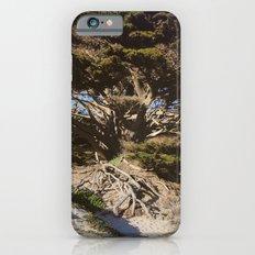 Ancient Wisdom, the California Monterey Cypress Tree Slim Case iPhone 6s