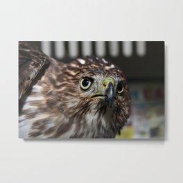 a Night Hawk Metal Print