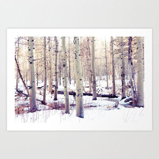 Aspen Trees in Winter Art Print