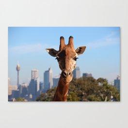 Sydney Urban Safari Canvas Print
