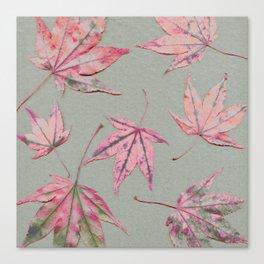 Japanese maple leaves - apricot on light khaki green Canvas Print