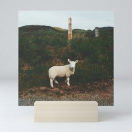 Little Lamb, Isle Of Mull Mini Art Print