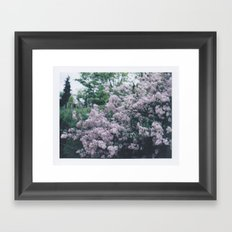 Korean Lilac Polaroid Framed Art Print