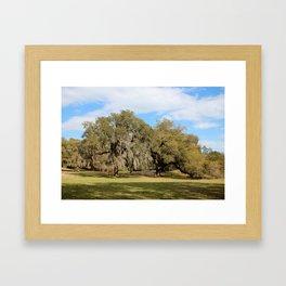 Southern Live Oaks Framed Art Print
