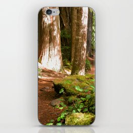 Hiking in the Old Growth Forest iPhone Skin