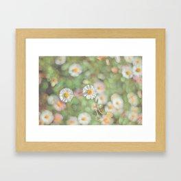 Sunbathing Daisies Framed Art Print