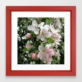 Simple Blossoms Framed Art Print