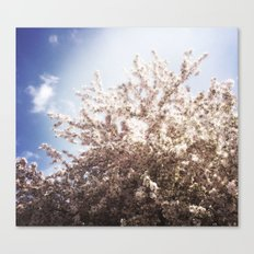 Blossoms in Spring Canvas Print