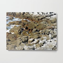 Penguin Colony Boulders Beach, Cape Town, South Africa Metal Print