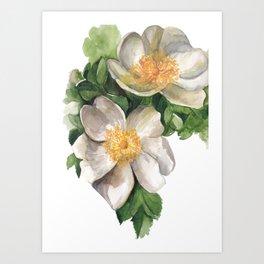 White Anemone Art Print