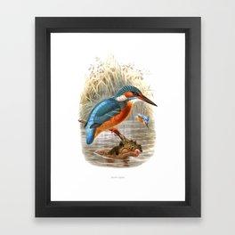 Vintage print,colorful poster of Kingfisher Framed Art Print