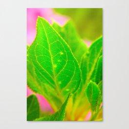 leafy green pink Canvas Print