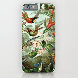 Vintage Hummingbirds Decorative Illustration iPhone Case