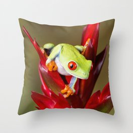 Red Eyed Tree Frog On Bromeliad Throw Pillow