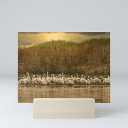 White Pelican Fleet 6801 - Northwestern Nevada Mini Art Print
