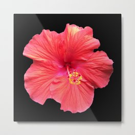 Pink and Red Hibiscus Flower 997 Metal Print