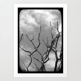 Twisted Branchs Art Print