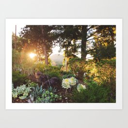California Morning Art Print