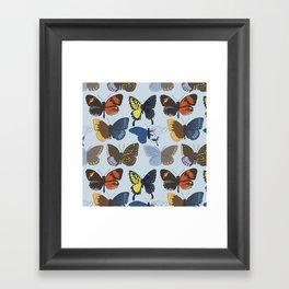 Gynandromorph Butterfly Framed Art Print