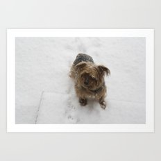 Snowy dog Art Print