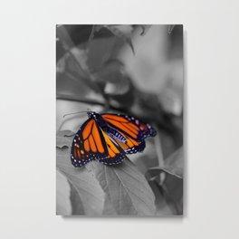 Monarch BW Metal Print