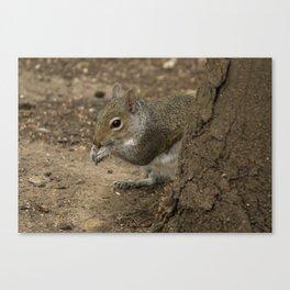 Woodland grey squirrel Canvas Print